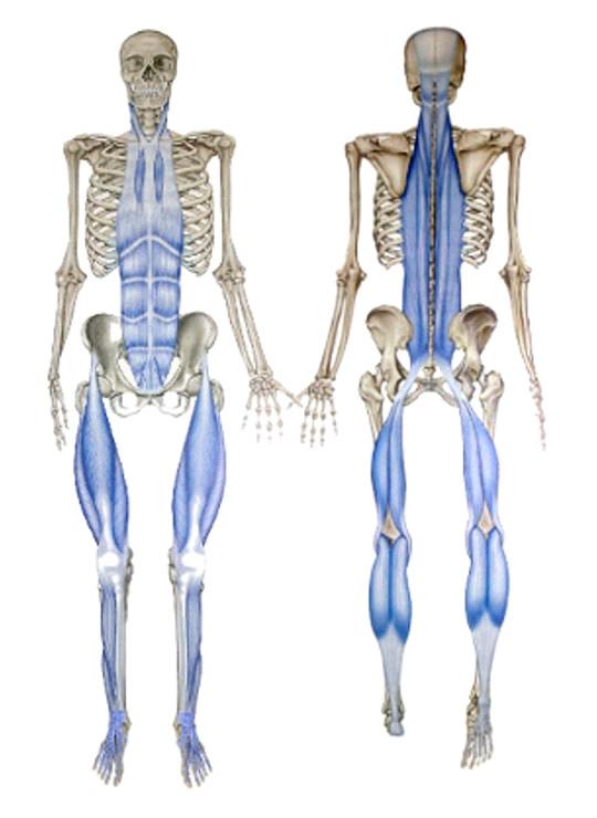 筋膜のイメージ画像